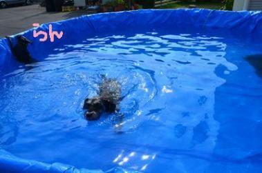 泳ぎるーくの