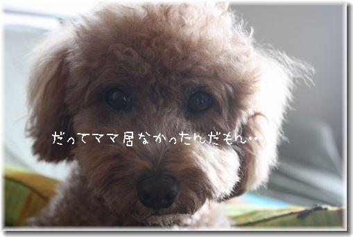 IMG_7768-1.jpg