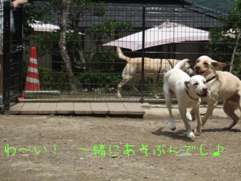 2009_08045gatu0013.jpg