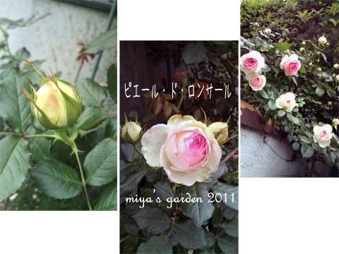 2011-05-10-garden1.jpg