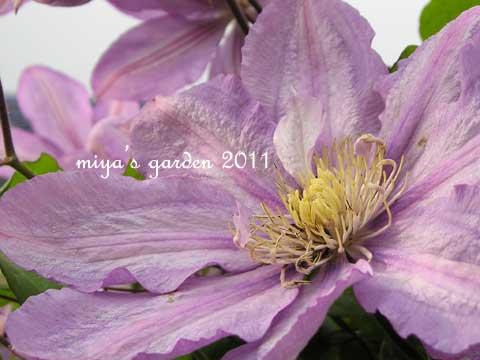 2011-05-10-garden6.jpg