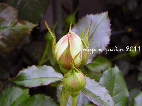 2011-05-10-garden7.jpg