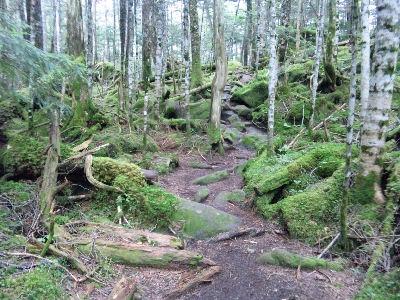 樹林帯の中の山道