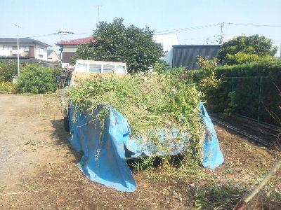 草満載のボンゴ