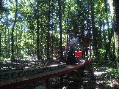 森林の中の、フォルテ