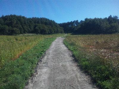 蕎麦畑の道