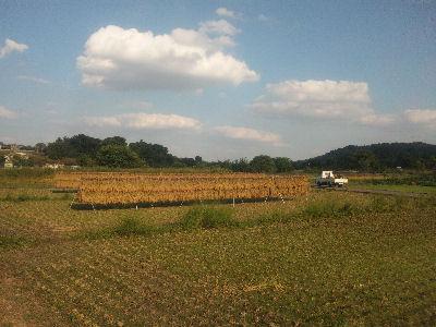 家から離れたほうの田んぼ、稲刈り終了