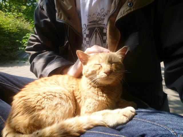 cat2011051904