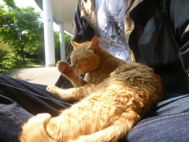 cat2011051905
