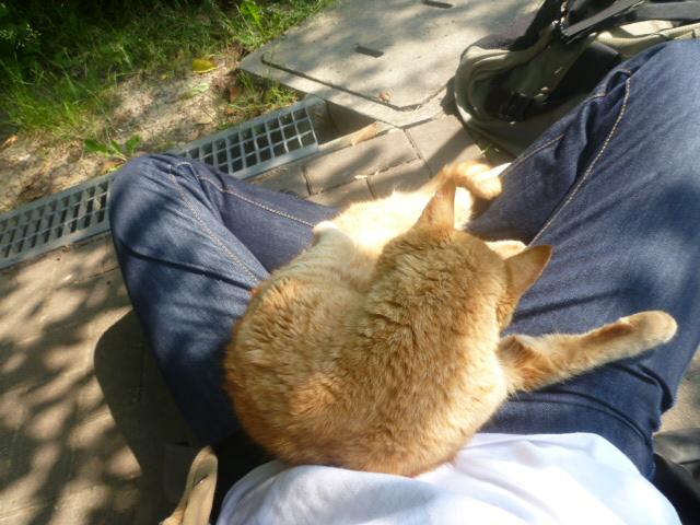 cat2011051903