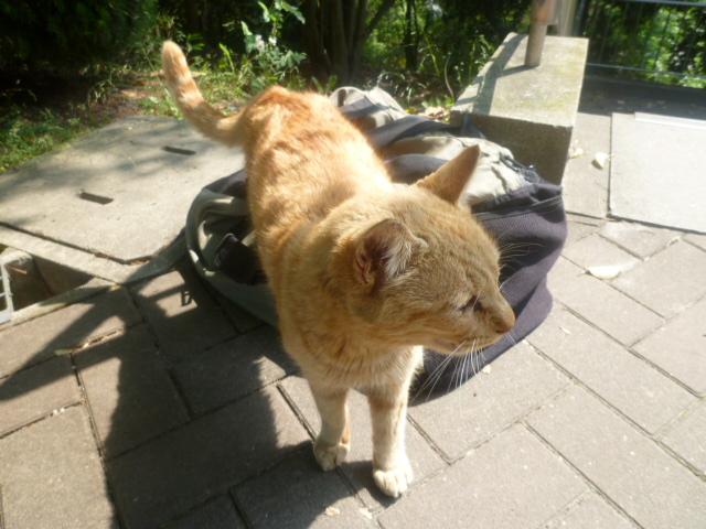 cat2011051902