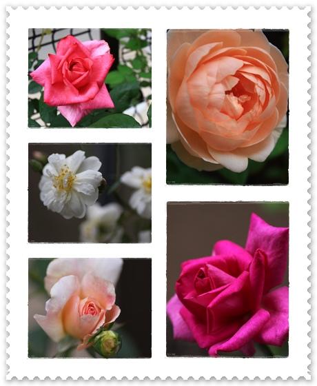 roze2009.jpg