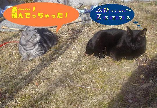 IMGP0104_20110130182819.jpg