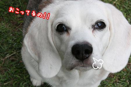 1_20091011174932.jpg