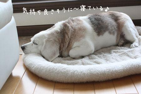 1_20091012114102.jpg