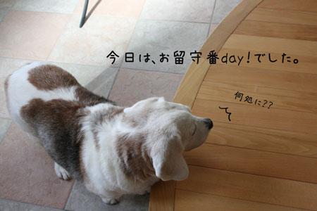 1_20091015194855.jpg
