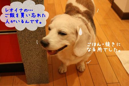 2_20090925185248.jpg