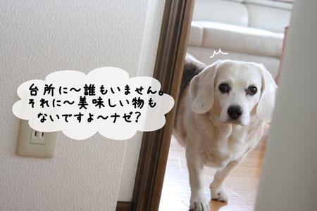 2_20091006133804.jpg