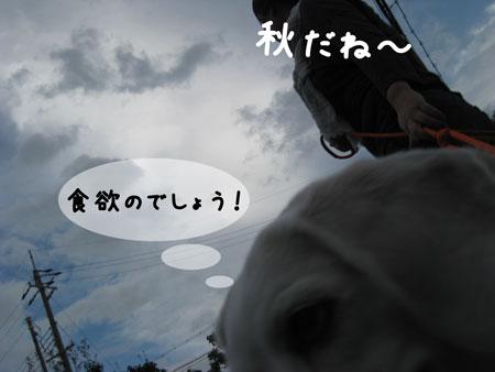 2_20091010195419.jpg
