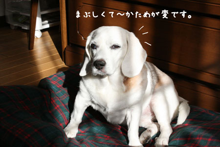 3_20090921191907.jpg