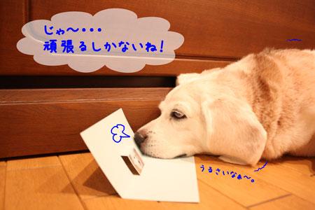 3_20090929202719.jpg