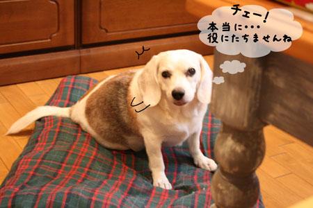 3_20090930200638.jpg