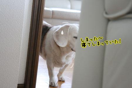 3_20091006133804.jpg