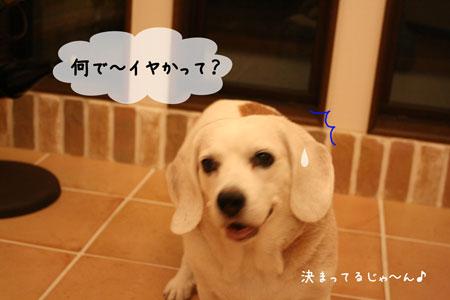 3_20091007185533.jpg