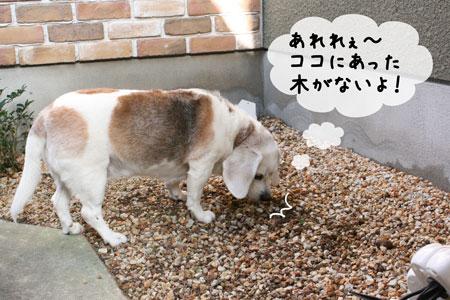 3_20091008153200.jpg