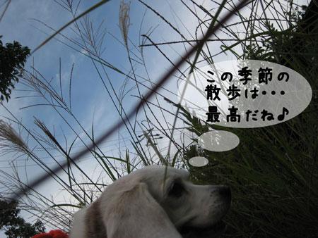 3_20091010195419.jpg