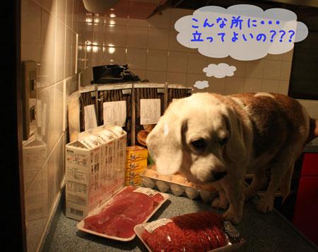 3_20091016201223.jpg