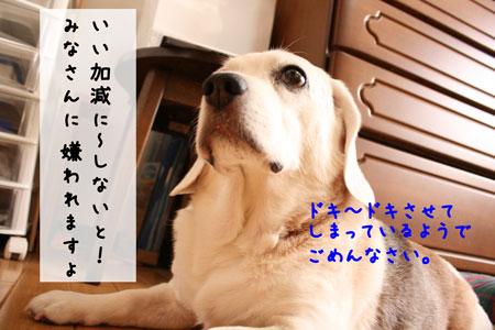 4_20090920170912.jpg