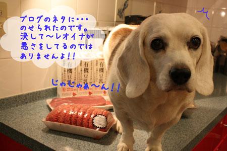 4_20091016201223.jpg