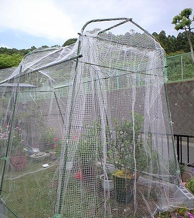 2009-5月-防鳥ネット