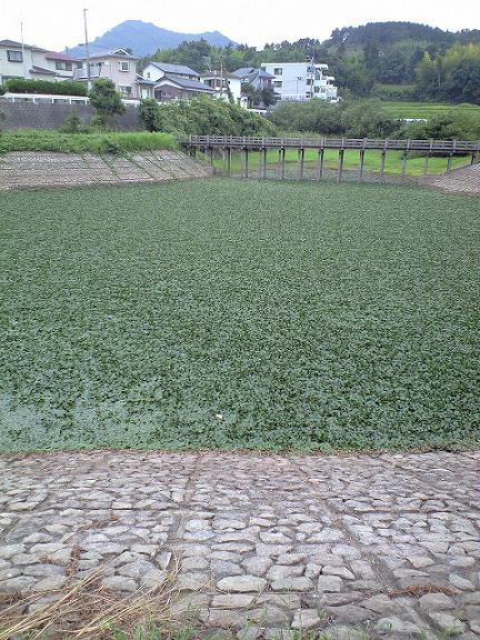2008年9月13日菱池いっぱい