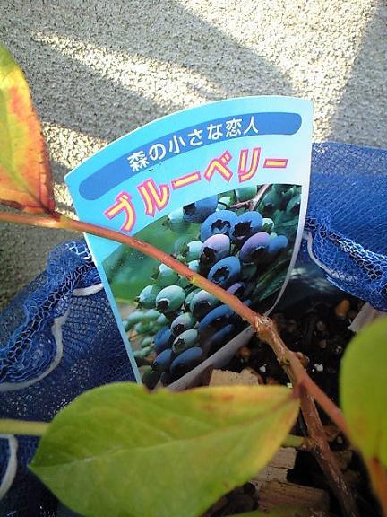 2009-08-26-森の小さな恋人シリーズ
