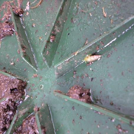 2009-09-26ミノウブルーの鉢の底