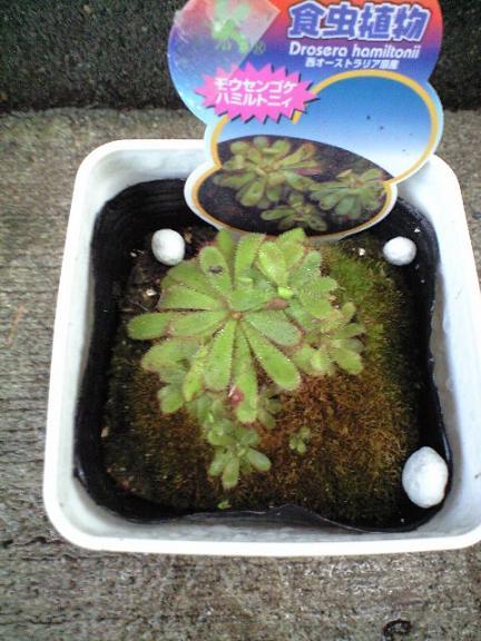 2009-10-02-食虫植物5