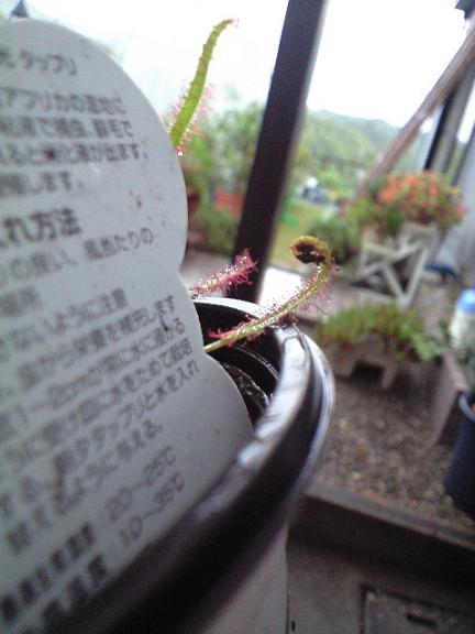 2009-10-02-食虫植物2