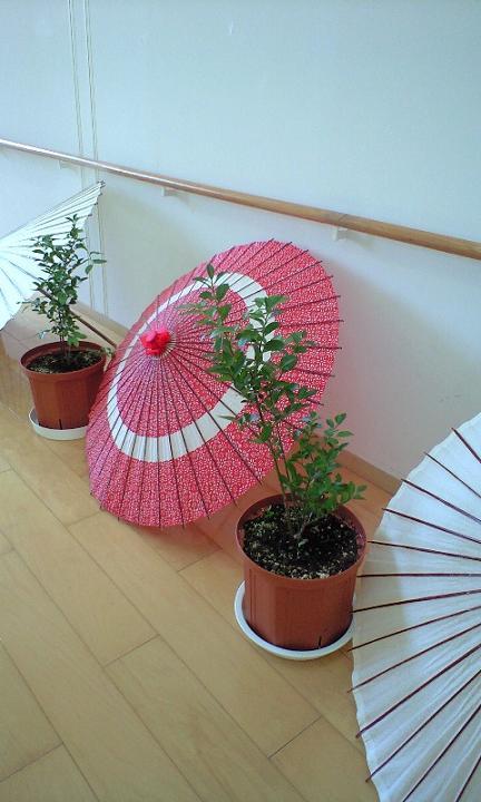 2008-09-20-和傘の演出とブルーベリー1