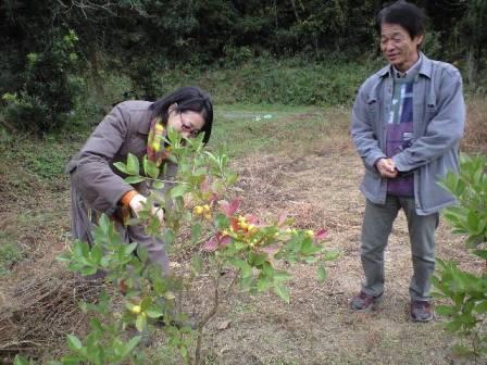 2009-11-19-宗像農園グァバ3