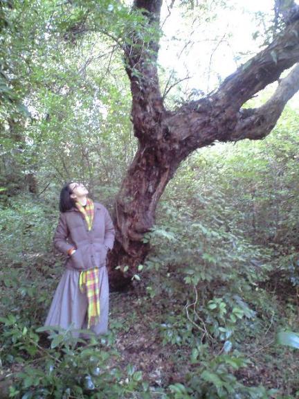2009-11-19-シャシャンボの大木1