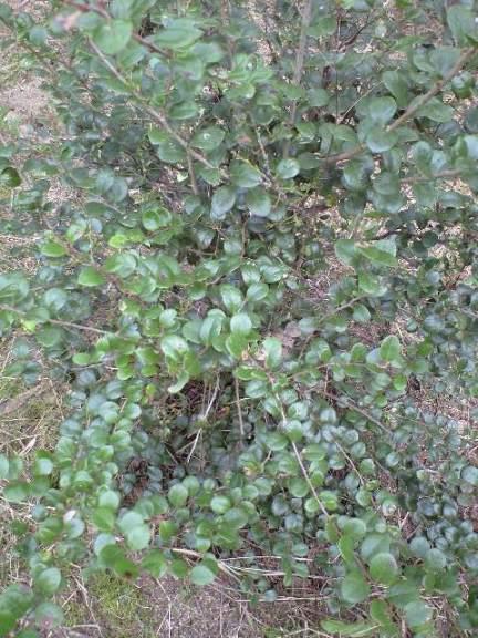 2009-11-19-宗像農園シャシャンボ10