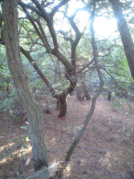 2009-11-19-シャシャンボの群生1