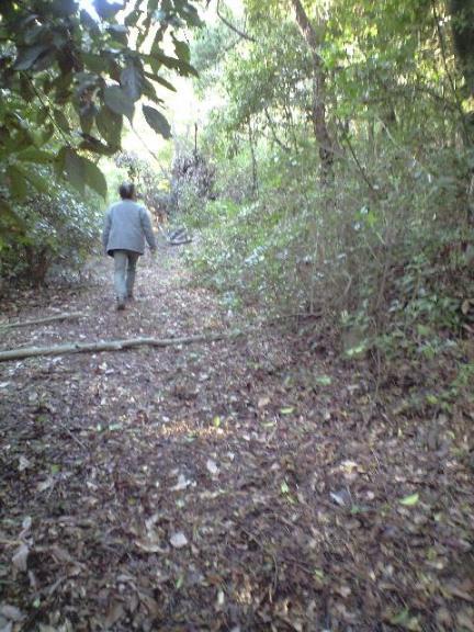 2009-11-19-シャシャンボの群生2