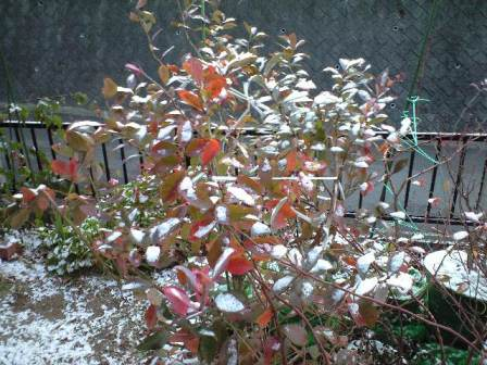 2010-01-13-雪景色