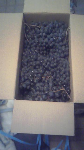 約10キロの葡萄