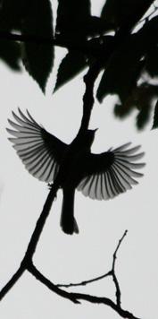 素朴派 鳥を撮る人