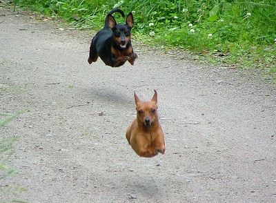 flying_dog[1]