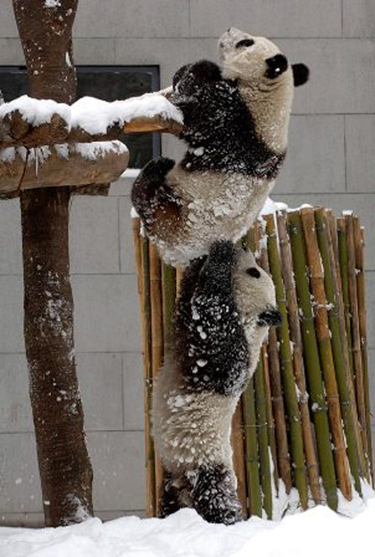 パンダ支える
